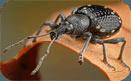 Дезинсекция помещений, уничтожение, травля насекомых.