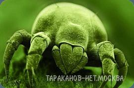 Дезинфекция помещения озоном. Уничтожение клещей домашней пыли (сапрофитов).